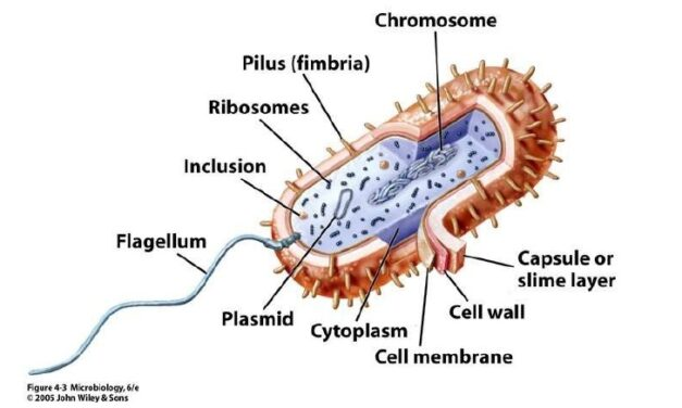Endotoxinele predispun pacienții la simptome severe COVID-19